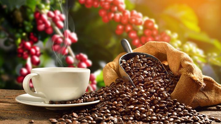 เรื่องน่ารู้เกี่ยวกับกาแฟที่คนรุ่นใหม่ควรอ่าน
